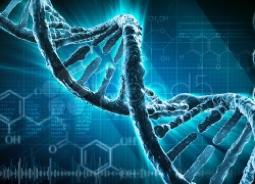Beschreibung: http://www.researchandinnovation.ie/wp-content/themes/gazette/functions/thumb.php? data-cke-saved-src=wp-content/uploads/2014/05/DNA.jpeg&w=250&h=180&zc=1&q=90 src=wp-content/uploads/2014/05/DNA.jpeg&w=250&h=180&zc=1&q=90