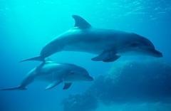 Beschreibung: elfine und Wale