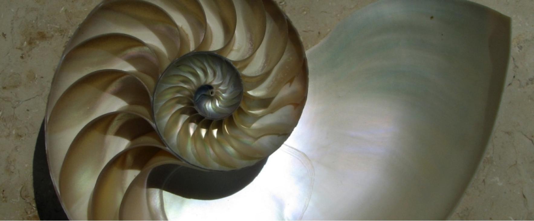 Beschreibung: http://quer-denken.tv/images/Nautilus_Chris_wiki.jpg