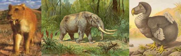 Beschreibung: iger-Mastodon-Dodo