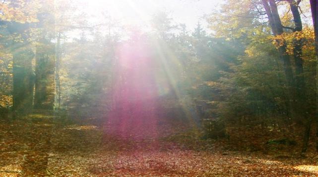 Beschreibung: ote Lichtgestalt im Wald